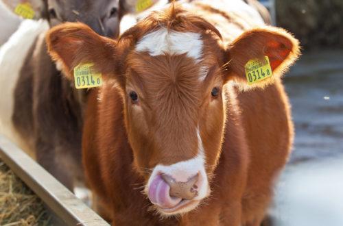 ilcardo-azienda-agricola-bio-suisse_02