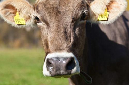 ilcardo-azienda-agricola-bio-suisse_04