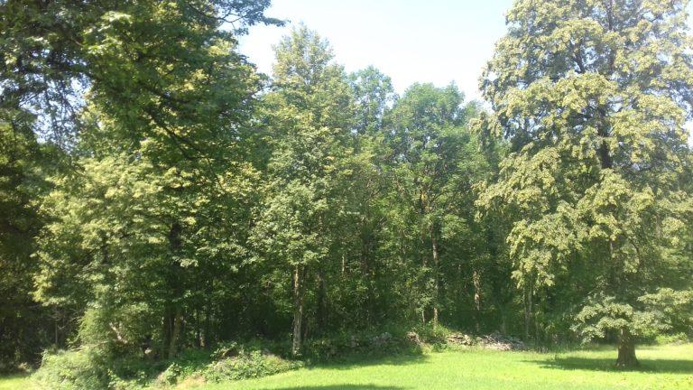 la foresta incantata
